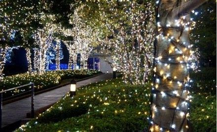 solar garden lights: fairy lights